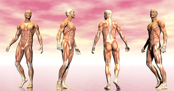 o musculo e suas estruturas site