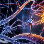 A neurobiologia da atividade física e o papel do profissional da Educação Física e de Nutrição